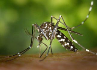 El verano y los mosquitos